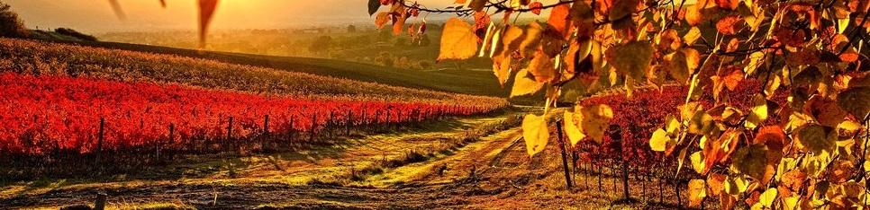 Liens utiles découvrir Bordeaux